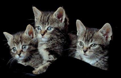 Stop animal abuse persuasive essay